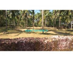 50 Cents Coconut Farm for Sale near Kankangad Periya,Bekal Fort