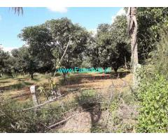 45 Acres Mango Estate for Sale near Nagalapuram,Chennai NH