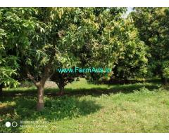 4.5 Acres Mango Farm Land for Sale near Karimnagar