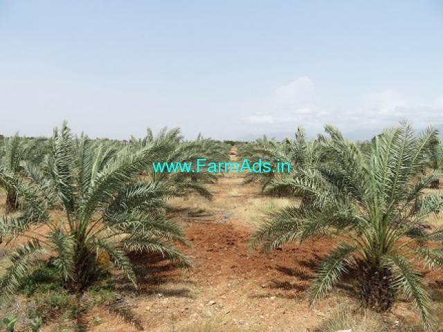 46.33 Acres Organic Farm Land for Sale near Palani