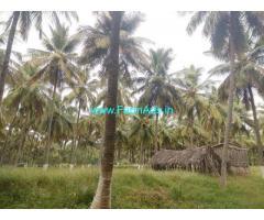 9.16 Acres Coconut Farm for Sale near Coimbatore