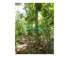 5.20 Acres Organic Farm Land Sale near Bidar,Amlapur Nagora Road