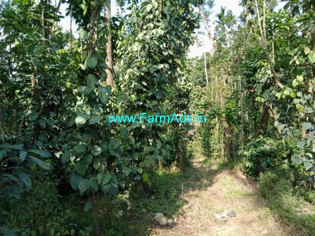 38 acre pepper plantation for sale in Hassan