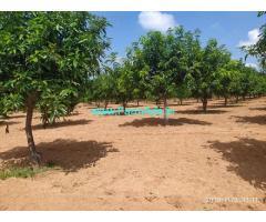 84 Acres Mango Farm for Sale near Mothkur