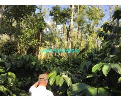 2.1 acre coffee estate for sale Just 3.5 km from mudigere city