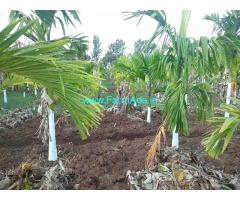 6 Acres Agriculture Farm Land for Sale near Mysore