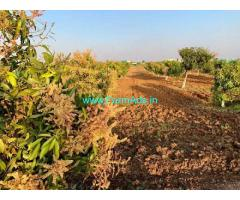 2 Acres Mango Farm Land for Sale at Amdapur