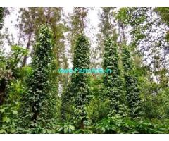 5.3 Acres Coffee Estate for Sale at Somwarpet