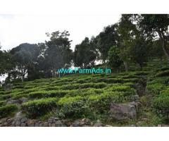 Low budget 2.02 Acres Tea Estate for Sale near Kotagiri