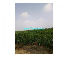 2 Acres Agriculture Land for Sale near Dharur