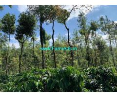 17 Acres Coffee Estate for Sale near Chikmagalur