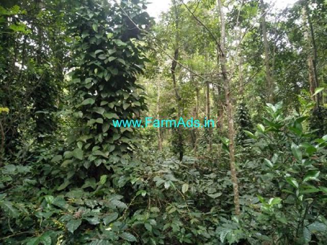 35 Gunta Coffee Estate for Sale near Mudigere Belur road