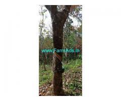 2 Acres Rubber Estate for Sale near Kottody