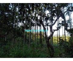 1.5 Acre Areca Plantation for sale in Kalasa