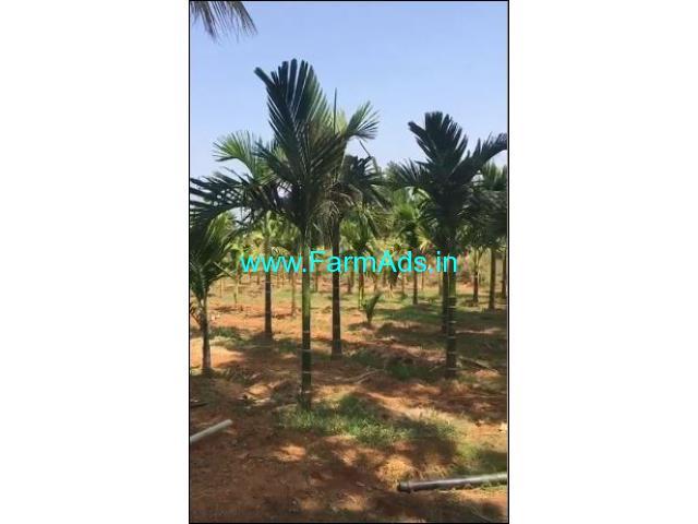 3 Acres Agriculture Land for Sale in Doddaballapur