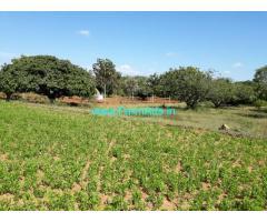1.23 acre mango farm land for sale just 25 kms from mysore – near udbur