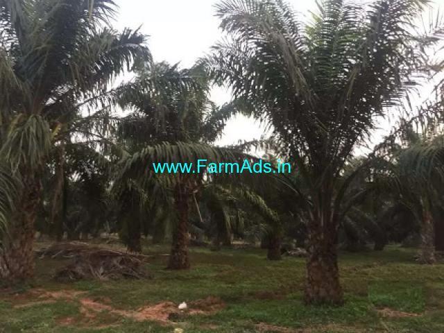 5 Acres Palm Oil Plantation for Sale near Devarapalle,Gopalapuram Road