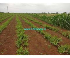 4 Acres Agriculture Land Sale near Kohir