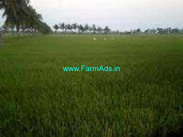 2 Acres Agriculture Land for Sale near Kovur