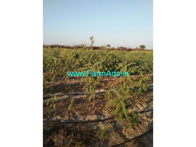 8.06 acres farm land for sale near Hiriyur taluk Chitradurga