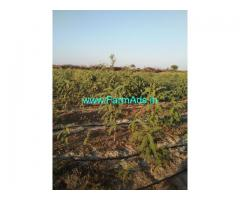 8.06 acres farm land for sale near Hiriyur taluk Chitradurga