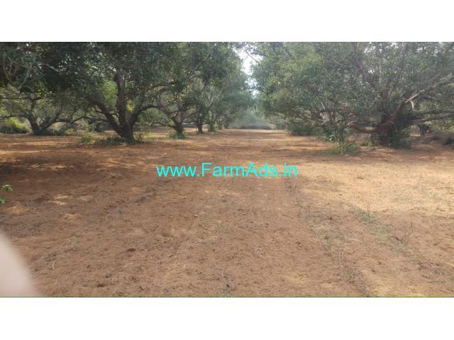 3 Acres Mango Farm for Sale near Sunkollu