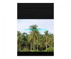 1 Acre Coconut Farm For Sale near Palem