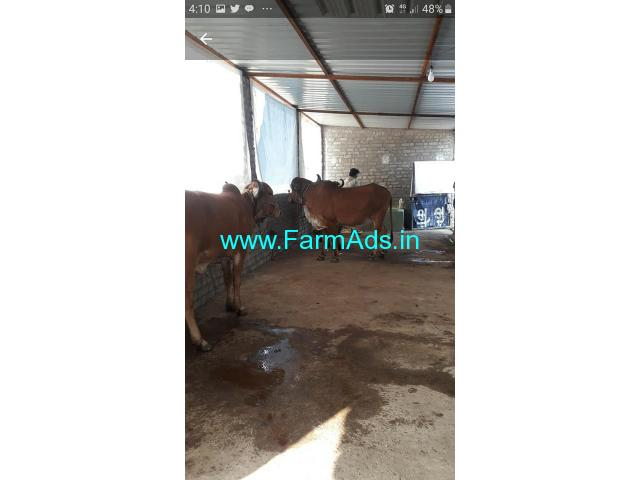 5 Acres Agriculture land with Cow Shed for Rent near Nagpur