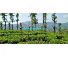5 acre Tea estate for sale near Thalappuzha