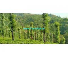 5 acre Tea estate for sale near Thalappuzha