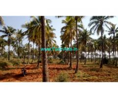 25 acre Coconut Farm land for sale at JJ Halli, Sira,