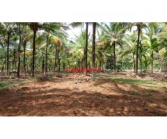 7.3 acre Coconut Farm and Paddy field for sale near Mysooru