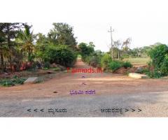 Sugarcane Farm for Sale - Mysore