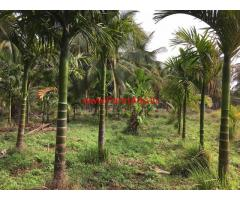 4 acre coconut farmland for sale near Tiptur, 3 hour from Bangalore