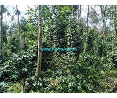 9 Acre Farm Land for Sale Near Chikmagalur