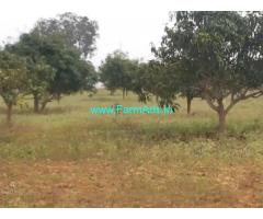 50 Acres Farm Land for Sale Near Penukonda