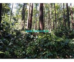 75 Acre Farm Land for Sale near Chikmagalur