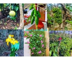 10 Acres Coffee Estate with Home Stay for Sale near Sakleshpur