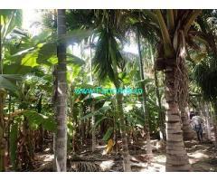 5.5 Acres Farm Land for Sale Near Hiriyur