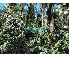 7 Acre Coffee Plantation Land for Sale Near Mudigere