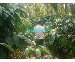 2 Acre Coffee Estate for Sale Near Chikmagalur,Balehonnur Road