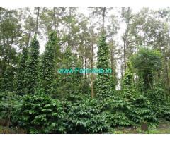 2 Acre Coffee Estate for Sale Near Sringeri