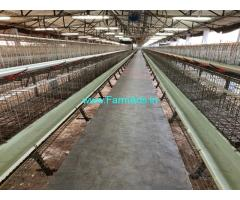 Poultry Farm For Lease with Layer Cage System Dharapuram