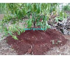 7 Gunthas Agriculture Land for Sale Near Bapwali