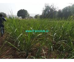 2.5 Gunta Farm Land for Sale Near Sangli