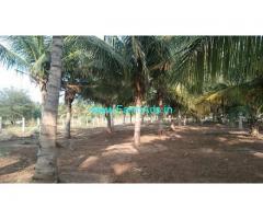 13.50 Acre Coconut Farms For Sale near Sathirapatti