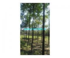 3 Acre Agriculture Land for Sale Near Tirupur