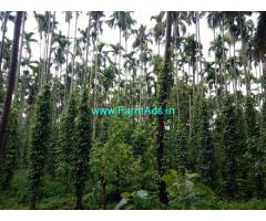 7.31 Acres Agriculture Land For Sale In Kattusseri