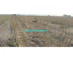 12 Acre Agriculture Land for Sale Near kanigiri
