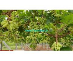16 Acres Grapes Farm Land For Sale near Penukonda,KIA Motors